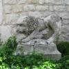38_leijona