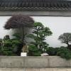 43_puut